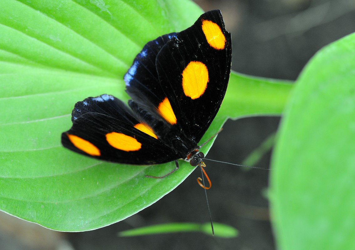 Butterfly Garden Zoo In The Heart Of Budapest Tiket Park Insect Kingdom