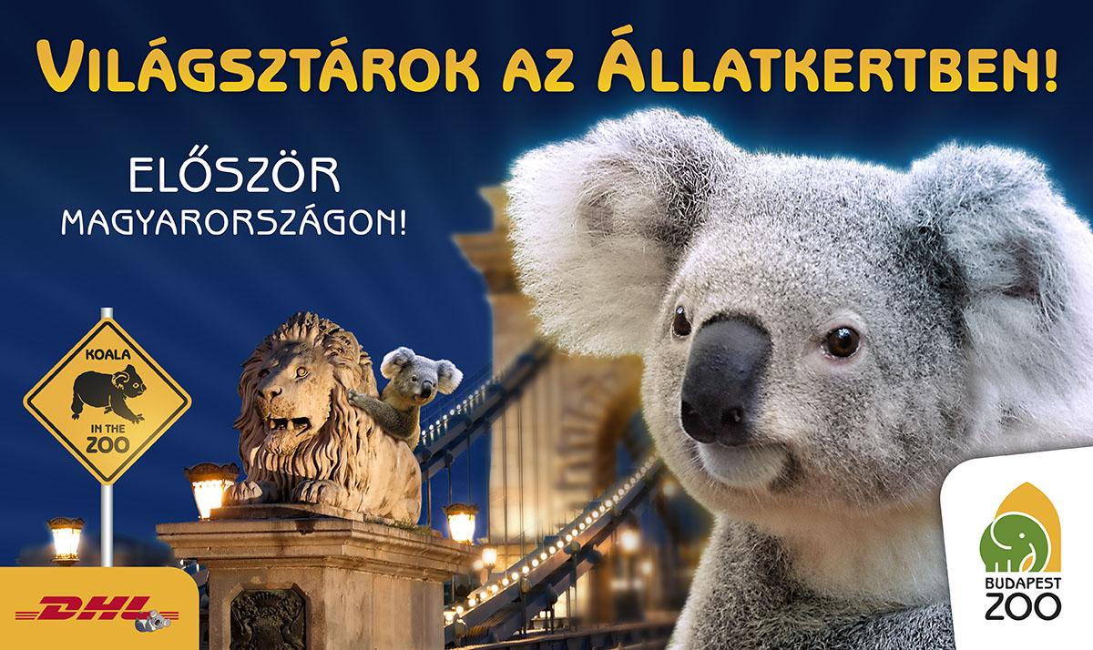ZOO_Koala_Belt%C3%A9ri_Molino_Screen.jpg