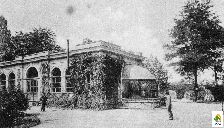Az Állatkert első, 1876-ban épült oroszlánháza, amelyet Hauszmann Alajos tervezett. Az első tigrisek is ebben a házban kaptak helyet. Divald Károly felvétele
