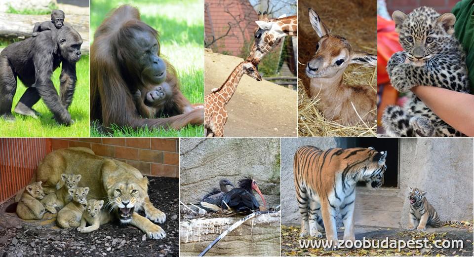 Veszélyeztetett állatok
