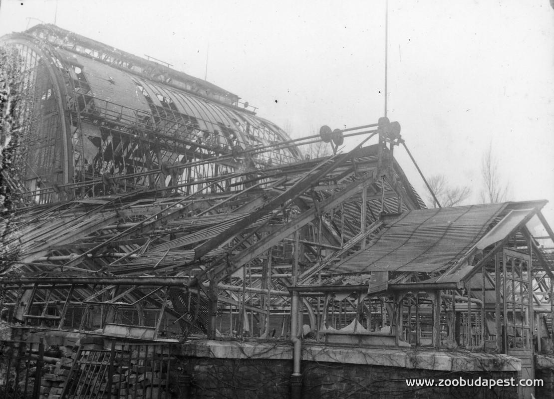 A Pálmaház Budapest ostroma alatt annyira tönkrement, hogy lehetetlen volt az ostrom utáni újbóli megnyitásra, 1945 május elsejére helyreállítani. Így az impozáns üvegházat csak 1952 végén vehette ismét birtokba a nagyközönség