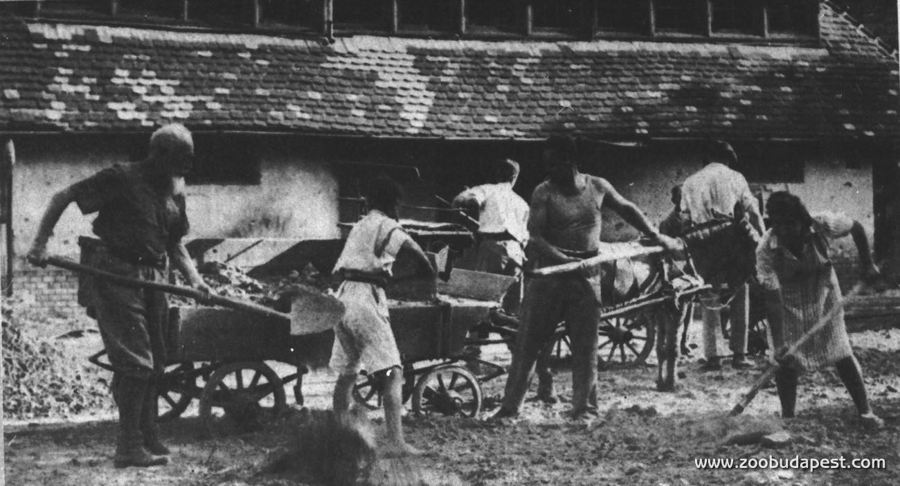 A második világháborús ostrom után szinte azonnal elkezdődött a romok eltakarítása, hogy az Állatkertet - még ha csak néhány állattal is - mielőbb újra ki lehessen nyitni: ez végül 1945. május elsejére sikerült