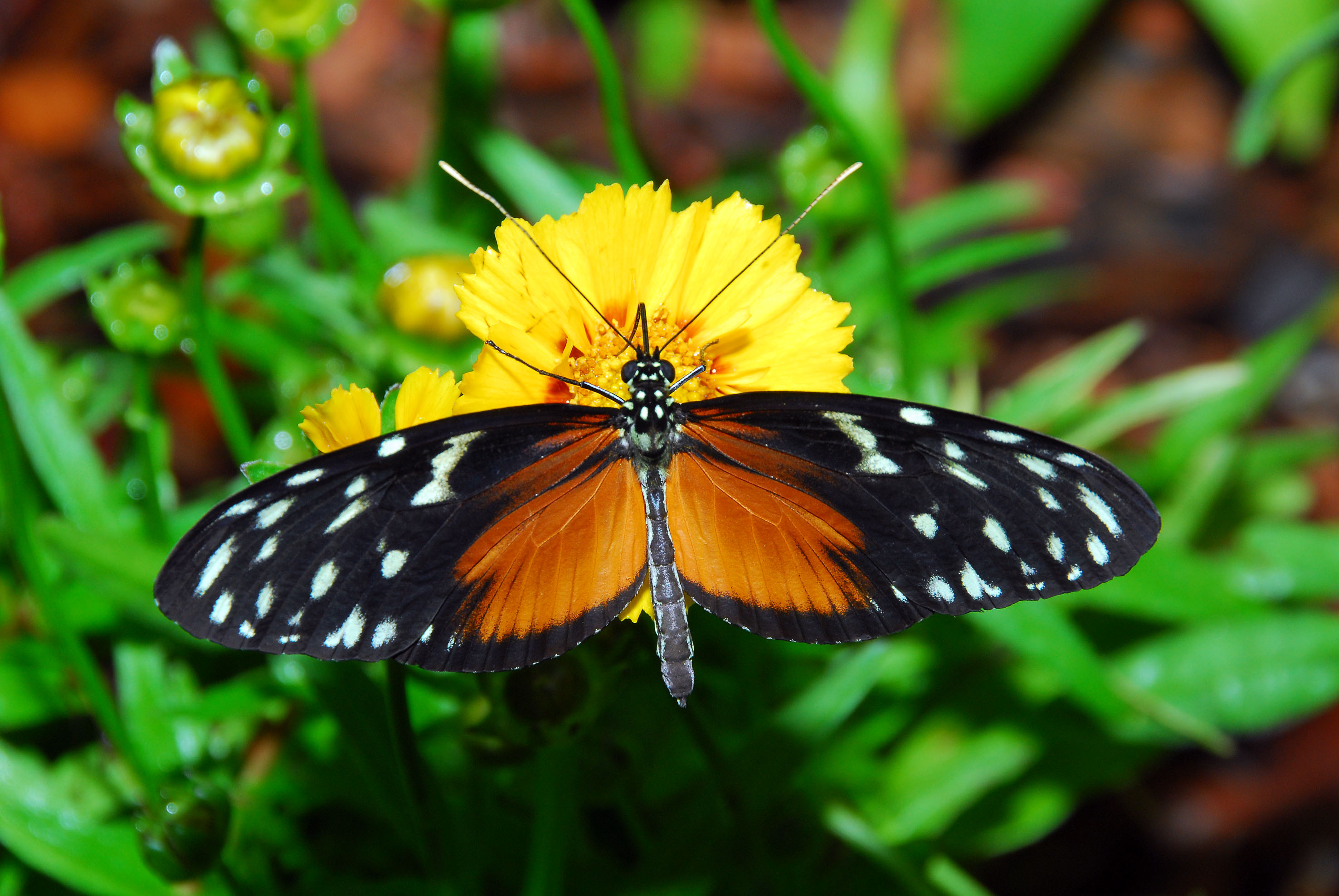 The Butterfly Garden Is Open Now | Zoo In The Heart Of Budapest